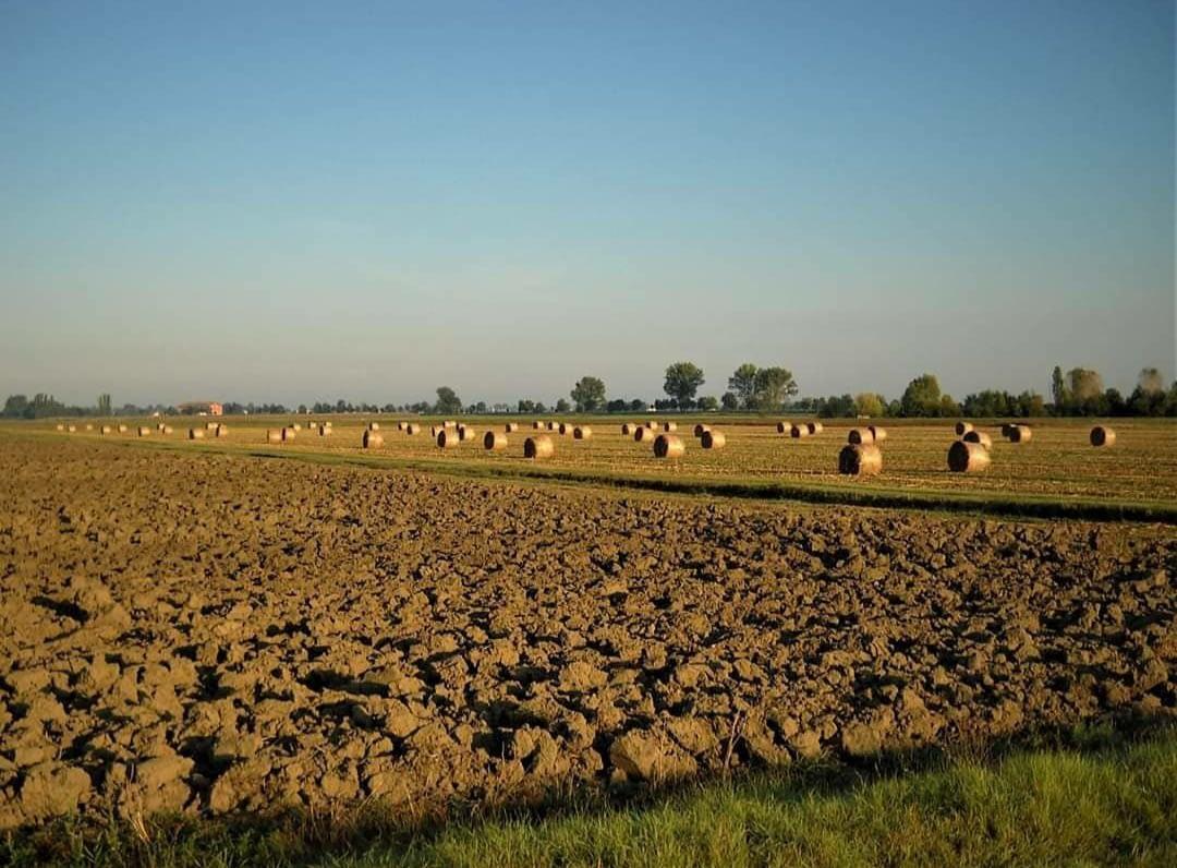 You are currently viewing L'agroforestazione in Partecipanza.