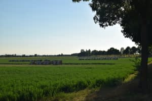 Read more about the article Verde, parchi e agroforestazione
